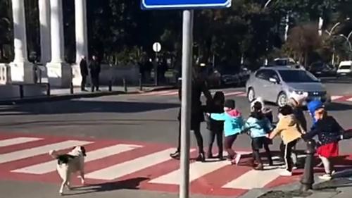 Dogilike.com :: ตามตูบมา! หมาจรฯแสนรู้ขวางรถ พากลุ่มเด็กอนุบาลเดินข้ามถนน (คลิป)