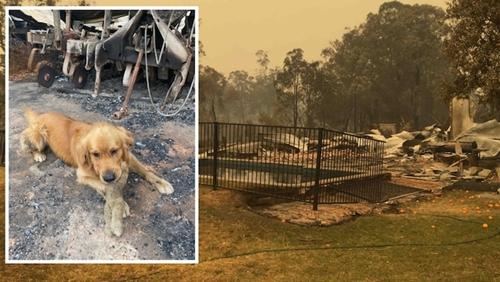 Dogilike.com :: ตูบสุดดีใจเจอตุ๊กตาแสนรักใต้ซากบ้าน หลังวิกฤตไฟป่าออสเตรเลีย!