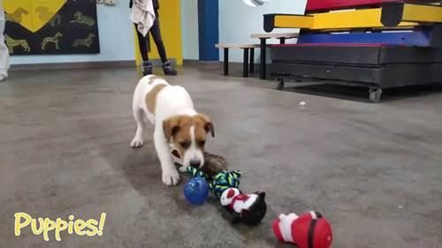 Dogilike.com :: เมื่อสุนัข 35 ตัวได้เลือกของเล่นด้วยตัวเอง และนี่คือสิ่งที่เกิดขึ้น!