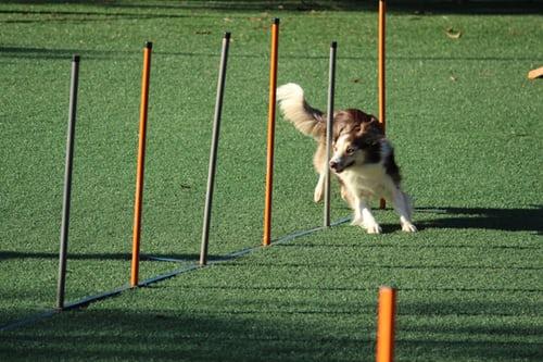 Dogilike.com :: ตั้งเป้าแล้วลุย! 4 ปณิธานปีใหม่ เจ้าของทำได้น้องหมาสุขภาพดี