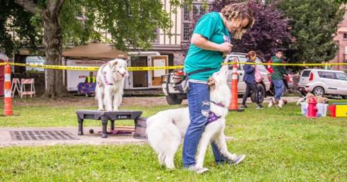 Dogilike.com :: น่าทึ่ง! สาวมะกันฝึกตูบหูหนวกตาบอดเรียนรู้คำสั่งด้วยการสัมผัส