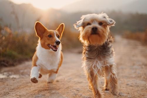 Dogilike.com :: 6 สัญญาณเตือนโรคข้ออักเสบในน้องหมา พร้อมวิธีดูแลเบื้องต้น