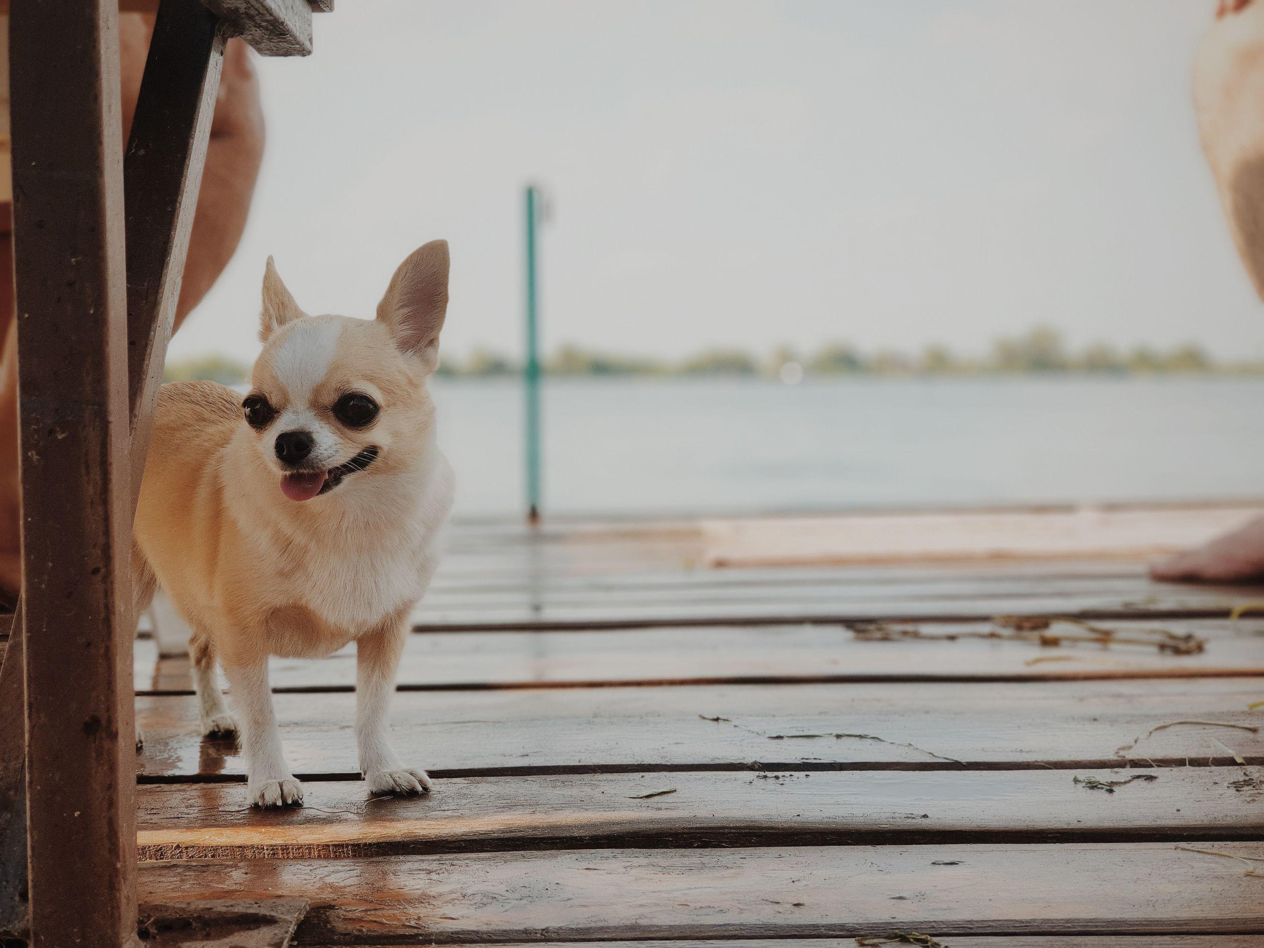 Dogilike.com :: 4 ทริคสร้างความมั่นใจให้หมาแมว ก่อนพาไปหาหมอครั้งแรก