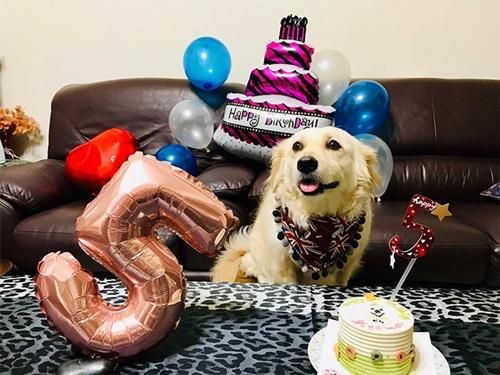 Dogilike.com :: เจ้า Teemo ตูบใบหน้าเศร้าทุกครั้งที่เห็นเจ้าของออกไปทำงาน