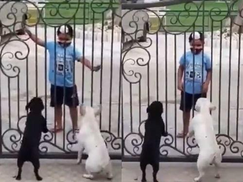 Dogilike.com :: ไวรัลจากอินเดีย! เมื่อหนูน้อยแวะเต้นรำแบบพื้นเมืองโชว์ 2 ตูบ