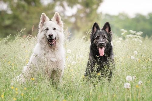 Dogilike.com :: น่ารัก! แมวเหมียวคิดว่าตัวเองเป็นหมา หลัง 2 ตูบช่วยเป็นพี่เลี้ยง