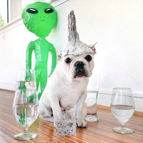Dogilike.com :: รู้จัก เจ้า Toad ตูบสายแฟชั่นแต่งตัวรับฮาโลวีนแบบไม่มีซ้ำ!
