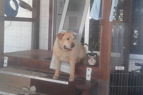 Dogilike.com :: ประตูมันหด! สาวฝากแฟนช่วยเลี้ยงเจ้าตูบ เจอหน้าอีกทีเป็นแบบนี้ไปแล้ว