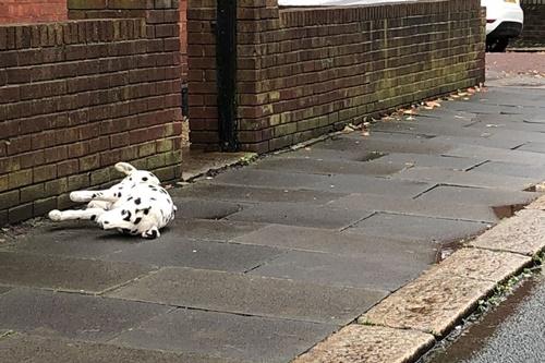 Dogilike.com :: สาวตกใจเห็นโพสต์ตูบโดนรถชนรีบเข้าไปช่วย สุดท้ายเป็นแบบนี้!