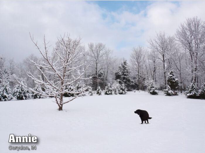 Dogilike.com :: ซื้อไหม! ปฏิทินน้องหมากำลังอึ 2021 นำรายช่วยเหลือสัตว์