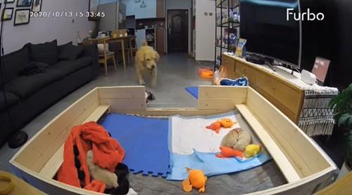Dogilike.com :: คลิปน่ารัก! แม่หมามือใหม่เห็นลูกๆร้องระงม รีบคาบของเล่นมาปลอบใจ