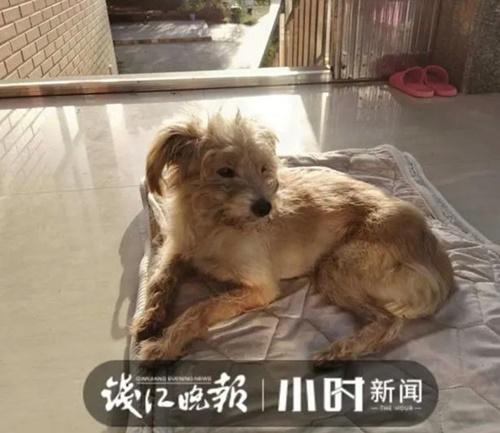 Dogilike.com :: ตูบสุดฉลาดเดินกลับบ้านเอง 60 กิโลฯ หลังเจ้าของลืมไว้ที่จุดพักรถ!