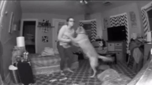 Dogilike.com :: ตูบแสนรู้ช่วยพาเจ้าของไปนอนเตียง หลังเมากลับจากปาร์ตี้(คลิป)