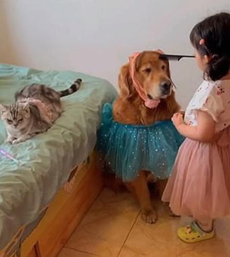 Dogilike.com :: น่าเอ็นดู! คลิปหนูน้อยงีบหลับกับพี่หมาเจ้าเหมียว คนดูกว่าล้านวิว
