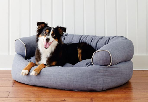Dogilike.com :: 4 วิธีเตรียมตัวเมื่อรู้ว่า น้องหมากำลังตั้งท้อง !