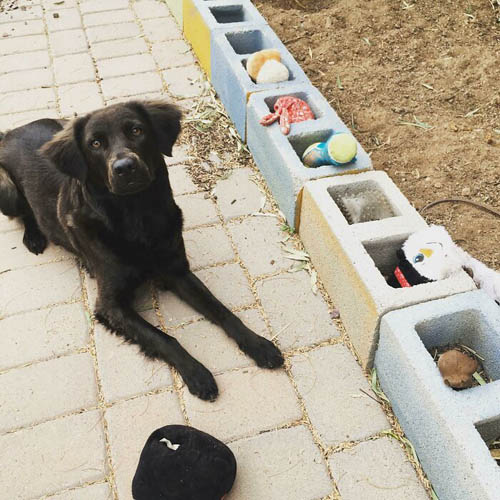 Dogilike.com :: รวมภาพน่ารัก เมื่อสัตว์เลี้ยงติดตุ๊กตาตัวโปรด ถึงเก่าแค่ไหนก็ยังรัก