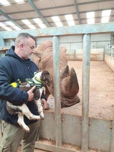 Dogilike.com :: เจ้า Indy สุนัขดมกลิ่นตักแรกที่จะช่วยหยุดขบวนการค้าเนื้อสัตว์ผิด กม.