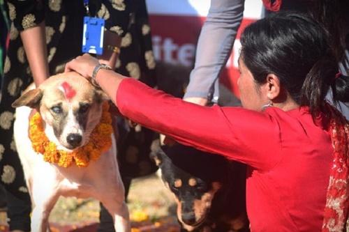 Dogilike.com :: คึกครื้น! เนปาลจัดยิ่งใหญ่เทศกาลบูชาน้องหมานาน 5 วันติด