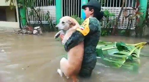 Dogilike.com :: คลิปประทับใจ จนท.ช่วยน้องหมาจากเหตุการณ์น้ำท่วมเม็กซิโก!