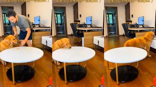 Dogilike.com :: ไวรัลทั่วโลก! คลิปโกลเด้นฯตีหน้าซื่อ ทำเนียนว่ายังไม่ได้กินขนม(คลิป)