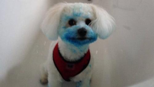 Dogilike.com :: แสบสุดๆ! เจ้าของโพสต์ภาพตูบแอบรื้อถังขยะจนเป็นแบบนี้