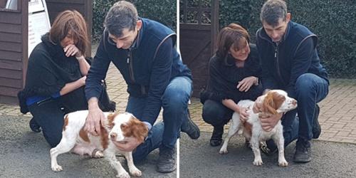 Dogilike.com :: กลั้นน้ำตาไม่อยู่! เจ้าของดีใจได้พบสุนัขที่ถูกขโมยไปกว่า 6 ปีอีกครั้ง