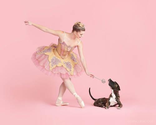 Dogilike.com :: บัลเลต์เปลี่ยนชีวิต! เผยเซ็ตภาพสุดน่ารักช่วยหาบ้านให้หมาแมว