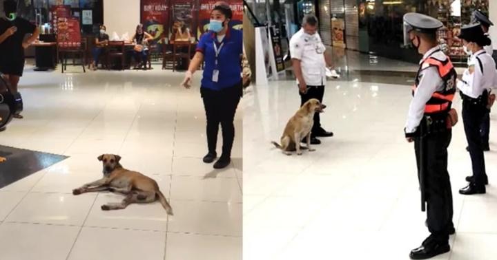Dogilike.com :: หมาจรแอบเข้าห้างฯในกรุงมะนิลา ก็เลยได้รับตำแหน่งใหม่แบบนี้!