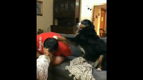 Dogilike.com :: สนใจหนูหน่อย! คลิปเจ้าตูบงอแงเพราะเจ้าของสนใจสุนัขตัวอื่น