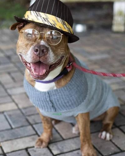 Dogilike.com :: น่ารัก! จับแก๊งเจ้าตูบสูงวัยมาแต่งตัว เฟ้นหาบ้านใหม่ที่พร้อมดูแล