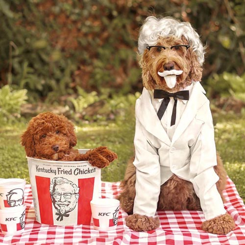 Dogilike.com :: เก็บตกความน่ารัก! เมื่อเจ้าขนปุยจัดเต็มแฟชั่นวันฮาโลวีน