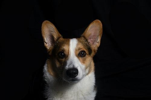 Dogilike.com :: จัดอันดับ 5 น้องหมาพันธุ์กลาง นิสัยดี น่ารักน่าเลี้ยง!