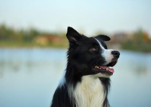 Dogilike.com :: จัดอันดับ 5 สายพันธุ์น้องหมาวิ่งเร็วที่สุดในโลก