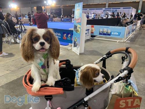 Dogilike.com :: Dogilike พาตะลุย Thailand International Dog Show 2020 ตอนที่ 2