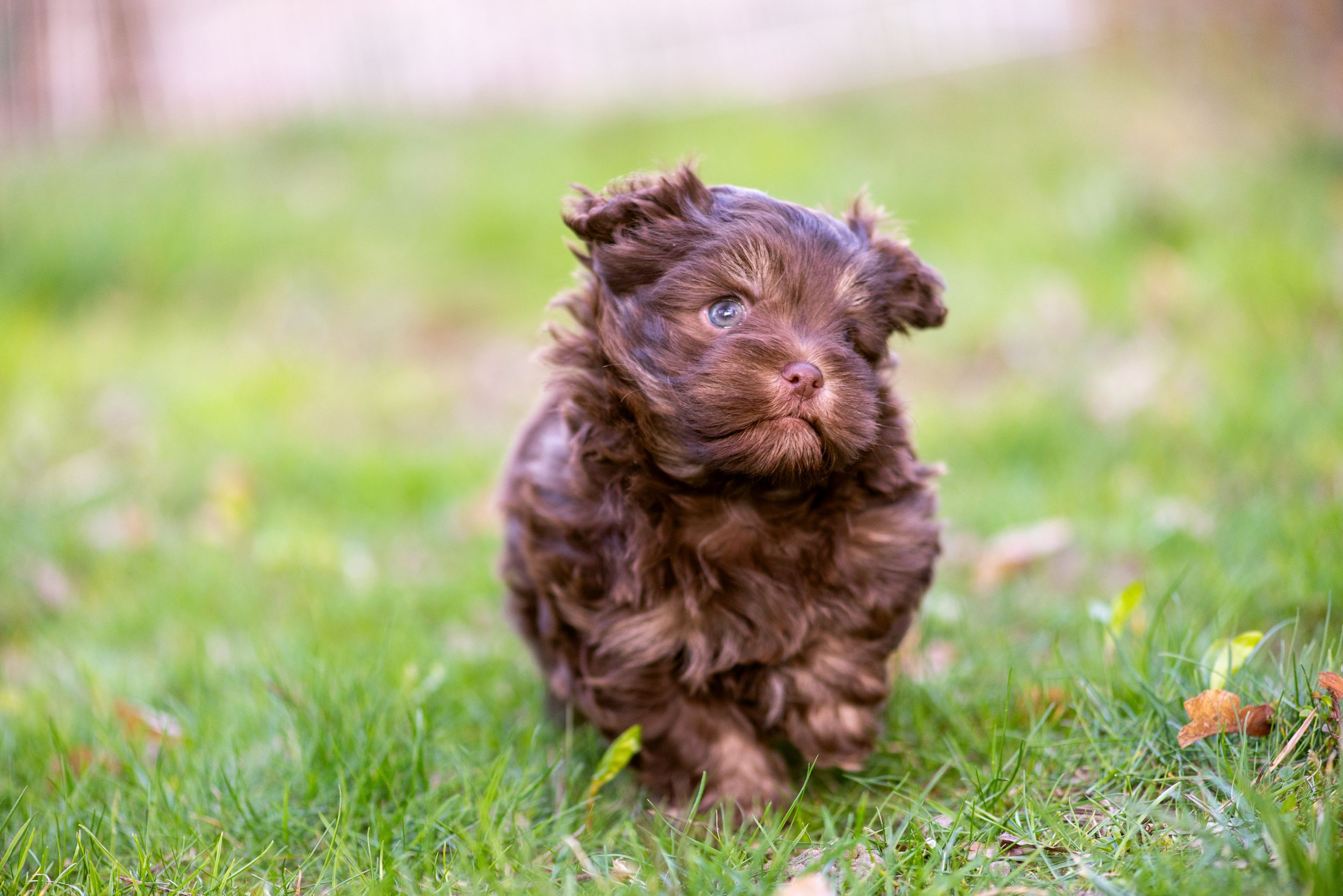 Dogilike.com :: 5 ทริคต้องรู้ ดูแลลูกสุนัขแรกเกิดให้เติบโตแข็งแรง!
