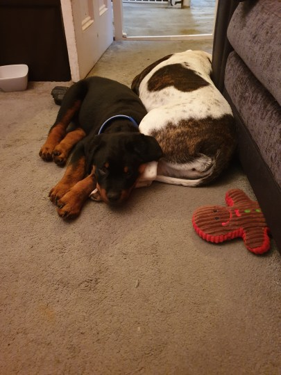 Dogilike.com :: ลูกหมาตาบอดถูกทิ้งลำพังในสวนสาธารณะ โชคดีได้บ้านใหม่อบอุ่น!