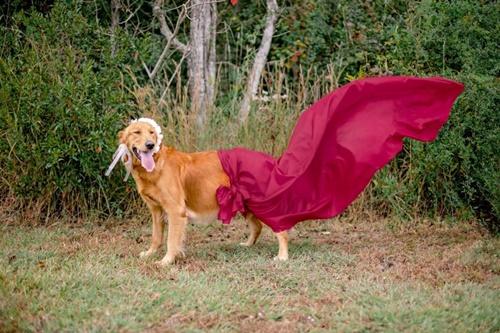 Dogilike.com :: เต็มสิบไม่หัก! เซ็ตภาพสุดน่ารักของสุนัขท้องแก่ ช่วยกระตุ้นการรับเลี้ยง