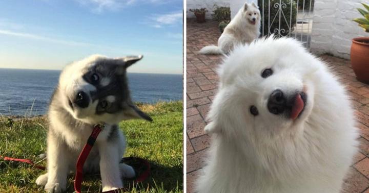 Dogilike.com :: ว่ายังไงนะ! 27 ภาพน่ารักเมื่อเหล่าเจ้าตูบโชว์ทักษะเอียงคอ