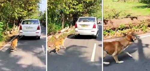 Dogilike.com :: วิจารณ์เดือด! ชายอินเดียถูกตำรวจจับ หลังผูกสุนัขไว้หลังรถยนต์