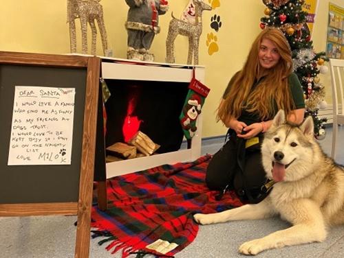 Dogilike.com :: เหล่าเจ้าตูบไร้บ้านส่งจดหมายถึงซานต้า ภาวนาขอให้ได้บ้านใหม่!