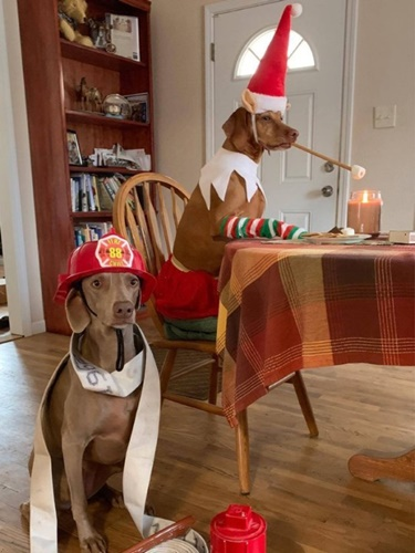 Dogilike.com :: สาวเผยถ่ายภาพ 2 น้องหมาน่ารักในธีมคริสต์มาสตลอดทั้งเดือน