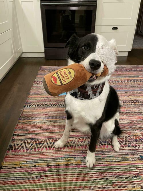 Dogilike.com :: รวมภาพน่ารัก! น้องหมาน้องแมวกับของเล่นสุดหวง