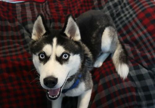 Dogilike.com :: หนูผิดอะไร? เจ้าของย้ายบ้านใหม่ ผูกเจ้าตูบทิ้งไว้ไม่เอาไปด้วย