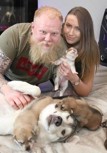 Dogilike.com :: สก็อตแลนด์เผยโฉมสุนัขพันธุ์หายากตกลูกกว่า 9 ตัว!