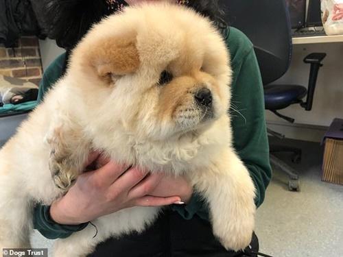 Dogilike.com :: อุทาหรณ์ซื้อลูกหมาออนไลน์ เจอขาด้วนส่งกลับคืนไม่ได้!