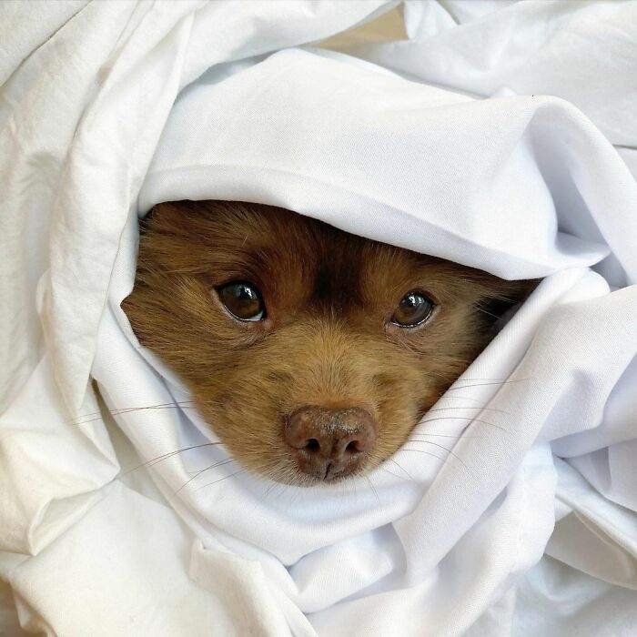 Dogilike.com :: สาวรับเลี้ยงหมาปอม หลังถูกทอดทิ้งเพราะเกิดมาตัวใหญ่!
