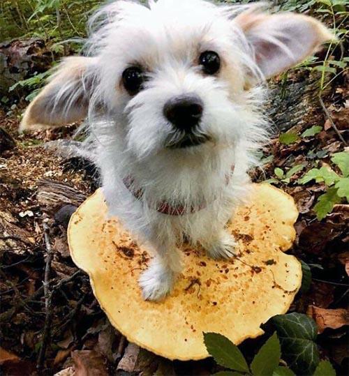 Dogilike.com :: แปลกแต่จริง! น้องหมายืนบนเห็ดกลายเป็นไวรัลไปทั่วโลก