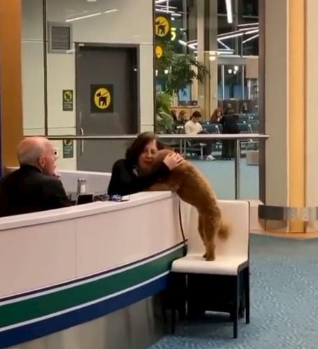 Dogilike.com :: แห่แชร์คลิปน่ารัก! น้องหมาขอให้กอดกลางสนามบินแคนาดา