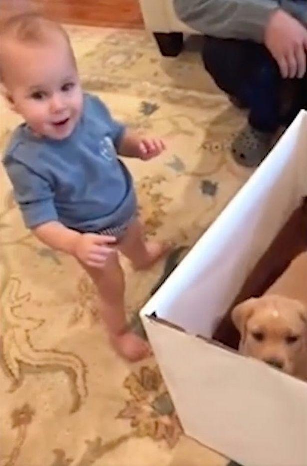 Dogilike.com :: น่ารักสุดๆ! หนูน้อยดีใจได้น้องหมาตัวน้อยเป็นของขวัญ(มีคลิป)