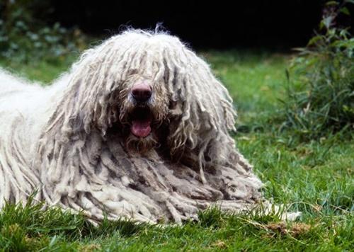 Dogilike.com :: จัดอันดับ 5 สายพันธุ์น้องหมาที่มีงานเจ๋ง ๆ ที่ใครเห็นเป็นต้องว้าว